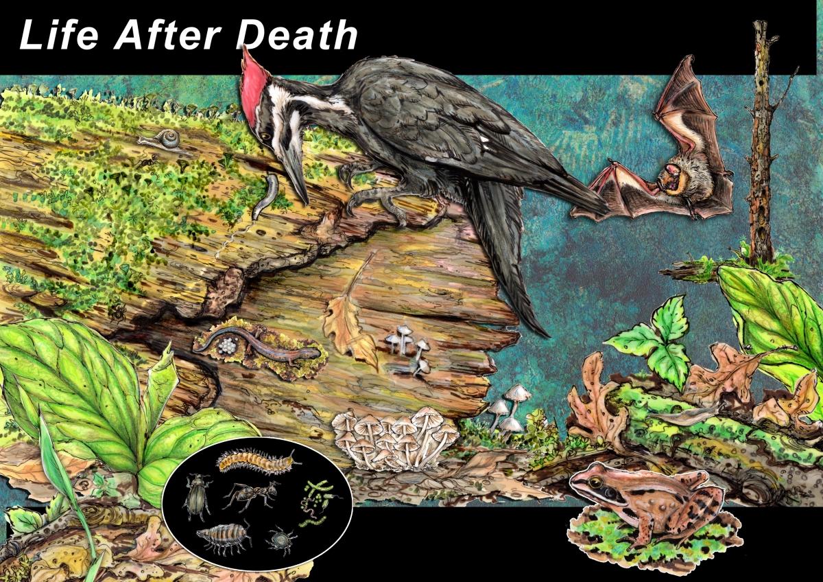 log life after death