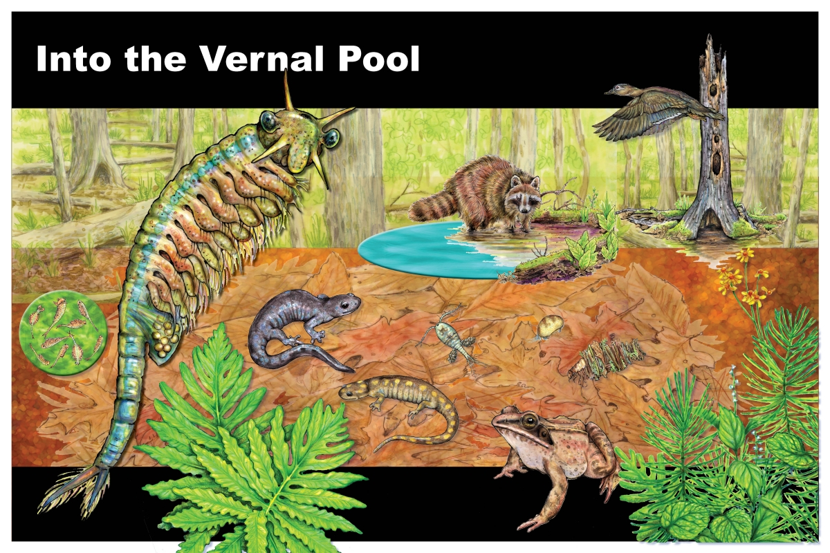 vernal pool portfolio 1