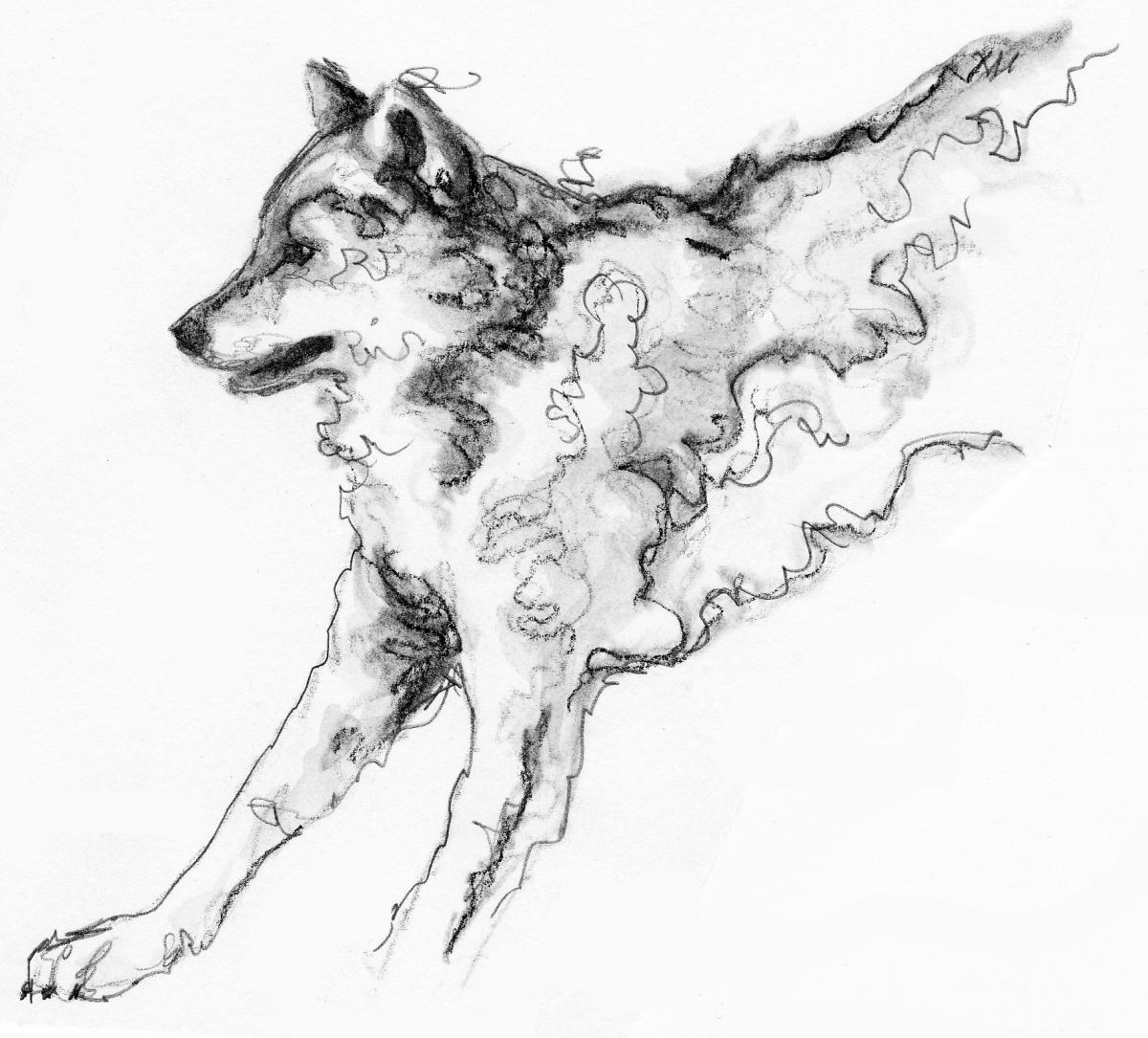 wolf 0002 2